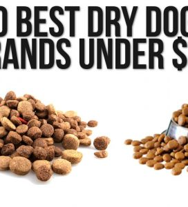 How to Buy the Best Dog Food